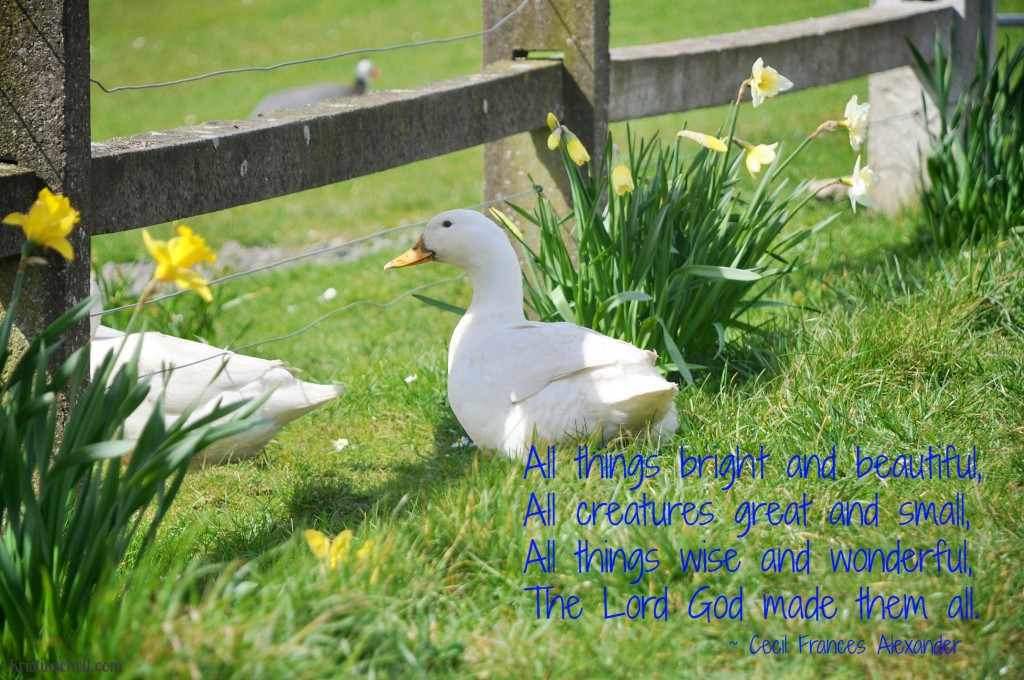 Mealtime Prayers: All Things Bright & Beautiful